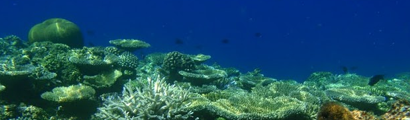 Maldives Reef